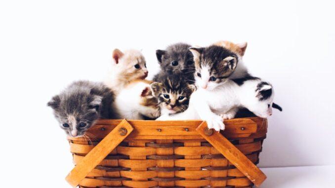 kattekilling-koebstaederne-forsikring